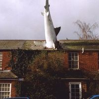 In Praise of The Headington Shark