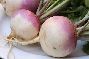 You call that a turnip? THIS is a turnip!