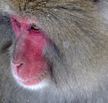 Baboon or a bassoon?