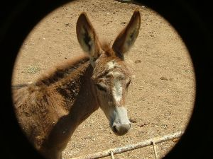 For some reason an assassin was after this donkey.
