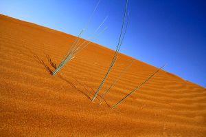 Even deserts grow hair.
