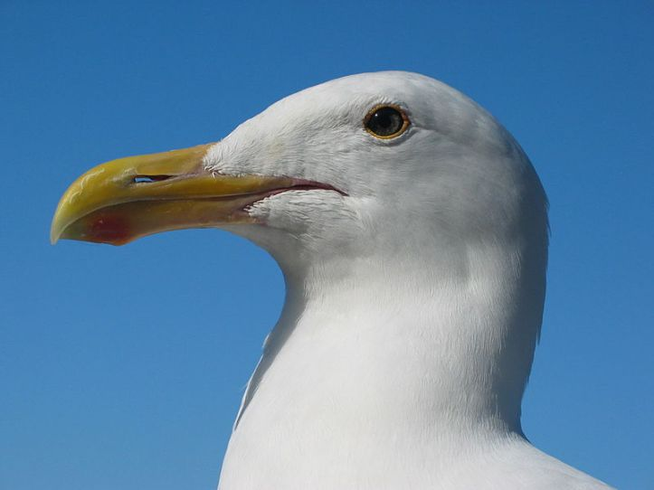 A gull (of the sea) looking a bit miffed. Presumably he (or she) is wondering where all the finish are going (answer: DOES NOT COMPUTE).