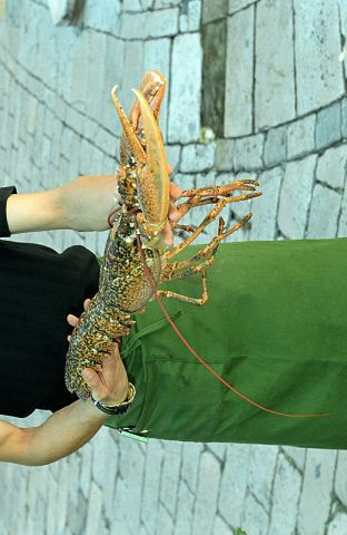 The lobster was so heavy this bloke fell over.