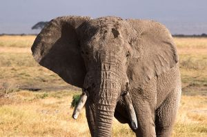 An elephant would add a touch of OOMPH to our suburb of Manchester.