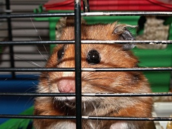 This is where hamsters belong - in jail!