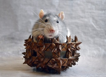 Even rats can be cute! You don't need to ratify this fact, man!