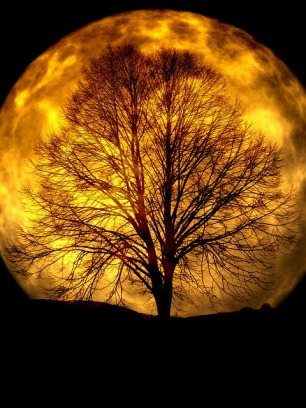 Urgh, how boring! Not even this tree can make the Moon interesting.