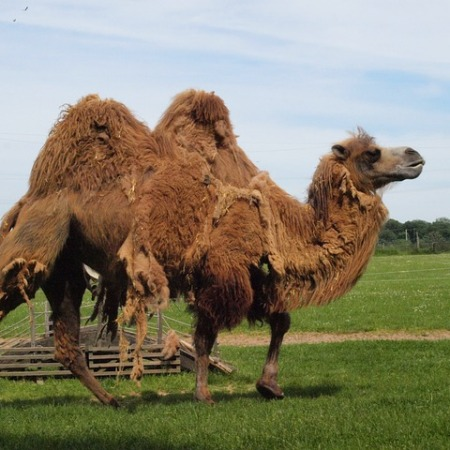 Camel Casing