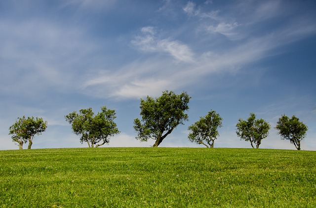 Freshly cut grass smell