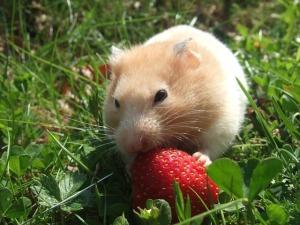 Hamster ball