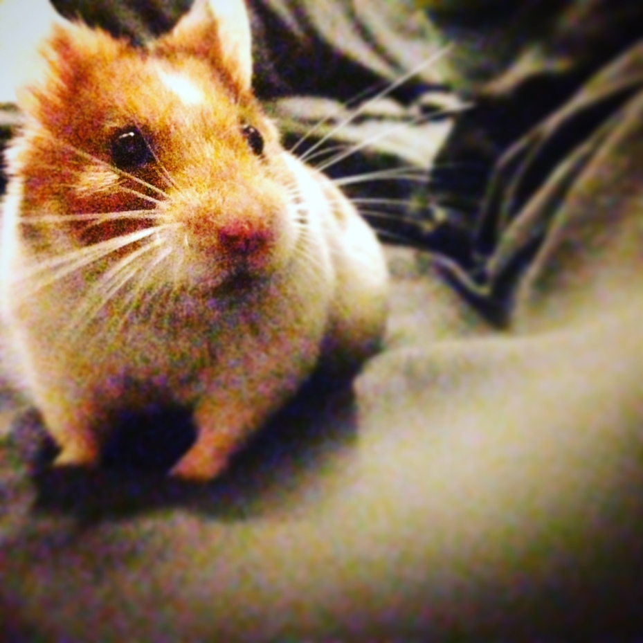Keith the Hamster
