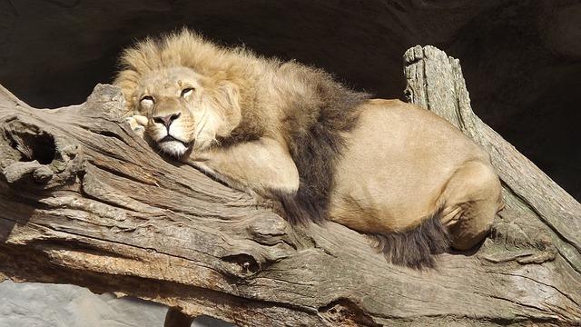 Lie Ins Lions