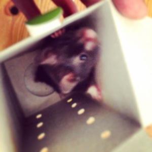 Steve the Hamster
