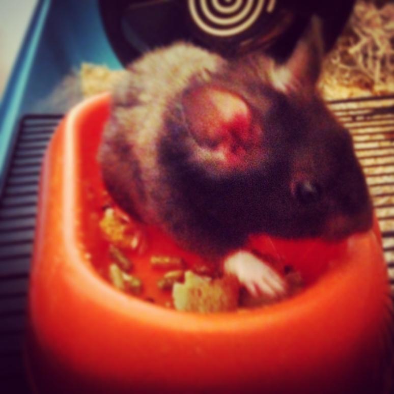 Steve the hamster!