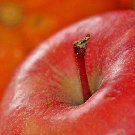 Apple stalk