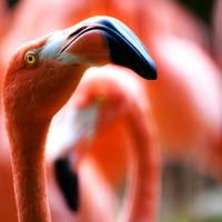 The Flamingo: Evolution Doing Flamboyant Stupidity to Perfection!