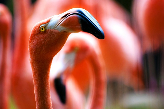 Flamingos arrogance