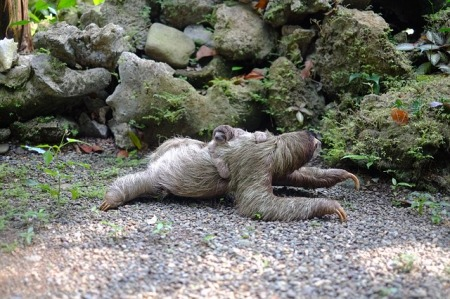 Why sloths are lazy