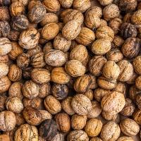 Do Walnuts Grow on Walls?