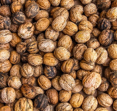 Walnuts grow on walls