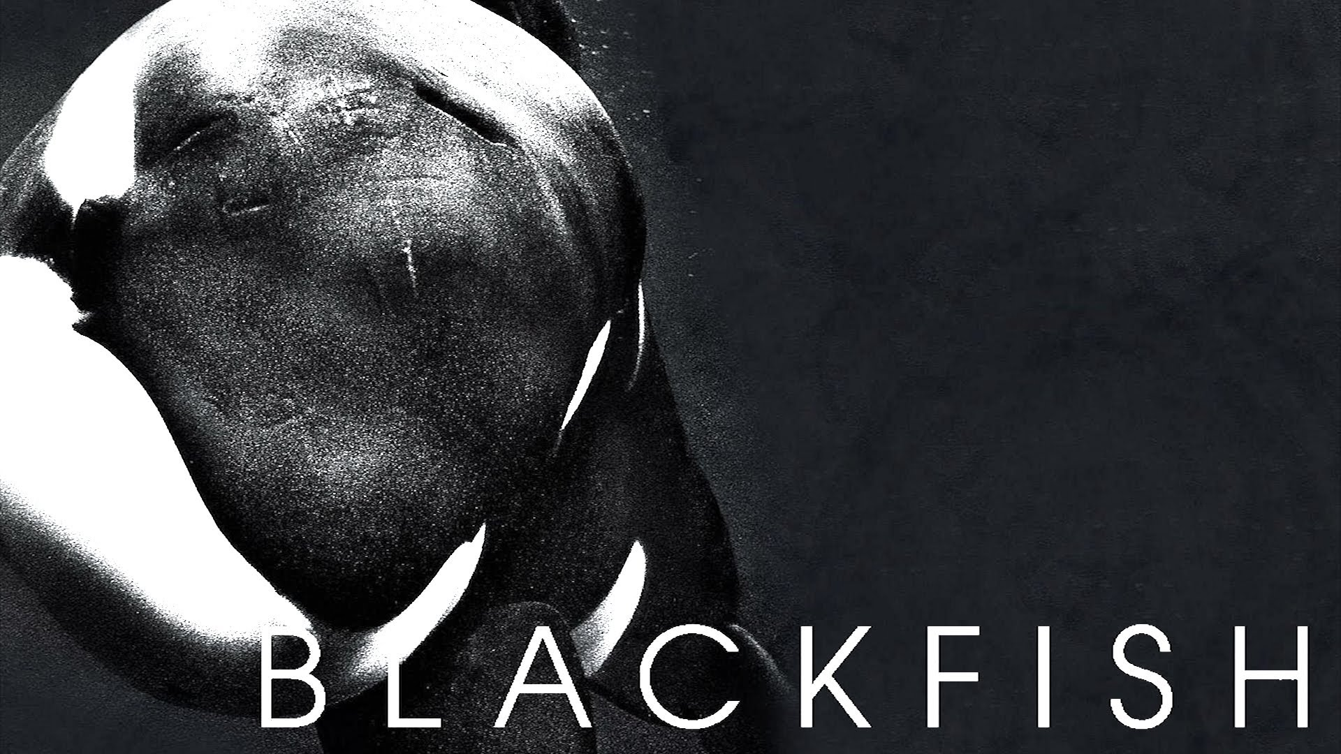 Documentary: Blackfish (2013) | Pretty Clever Films