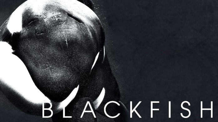 Image result for blackfish