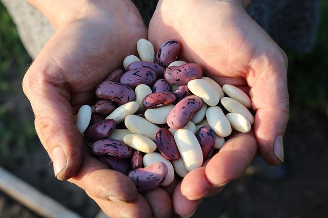 Spell the Beans