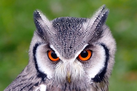 In Praise of Owls