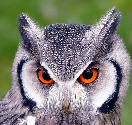 In Praise of Owls
