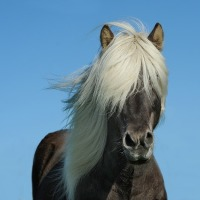 Great Sayings Revisited: Don't look a git horse in the mouth