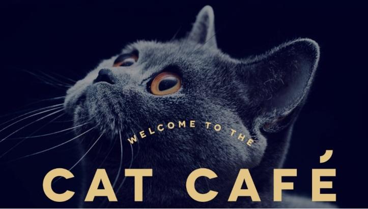 Cat Café Manchester