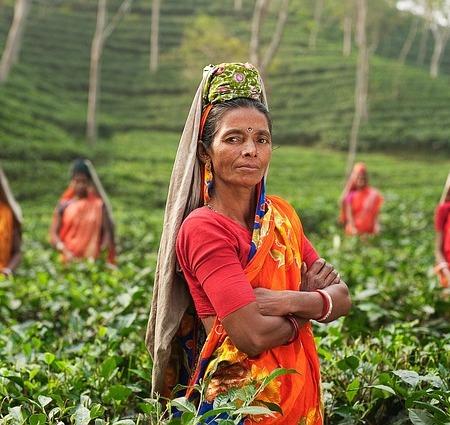 Women in a tea field