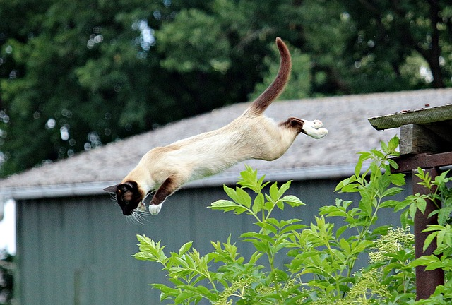 A cat jumping through the air near a bush
