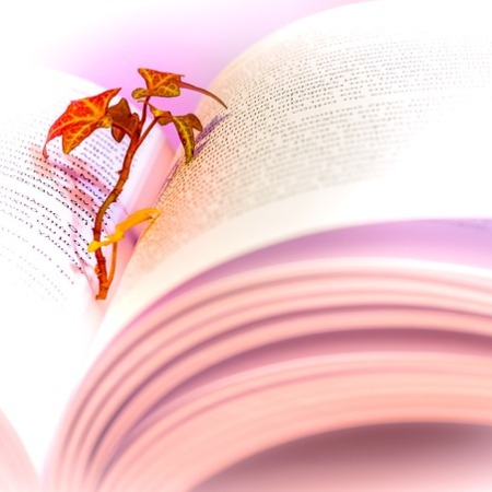 A flower in a book of poetry
