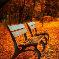 Haiku Friday #9: Autumn & Autumnal Illness Special