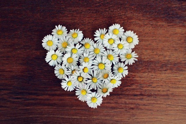 Daisies in the shape of a love heart