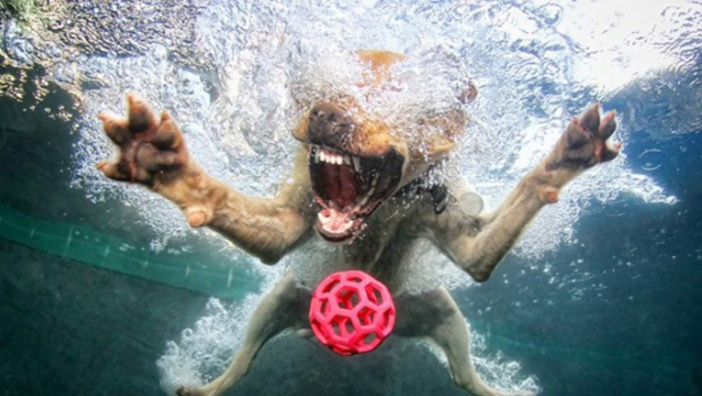 Underwater dog chasing a toy