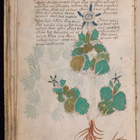 An extract from the Voynich Manuscript