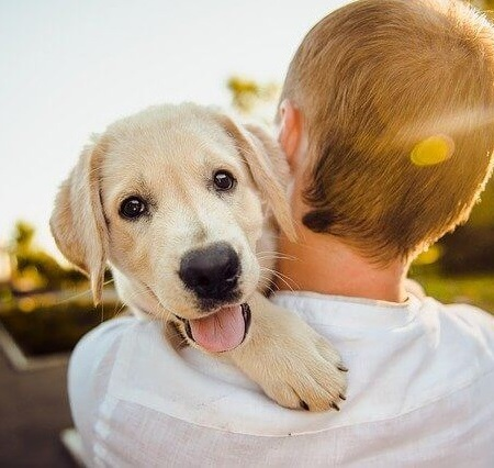 A man holding a pet dog in the sunshine.