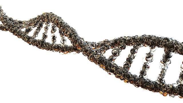 Gout DNA strand