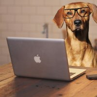 Office Pets: Introducing Animals to the Workplace