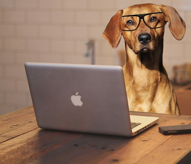 A dog in an office with some glasses on next to an Apple Mac