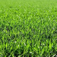 Exclusive Invention: Bulletproof Grass (to protect your lawns)