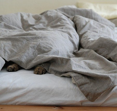 A messy duvet with a dog's paws underneath the duvet cover